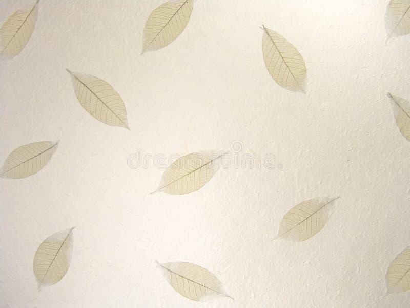 2 leaves mönsan skeletal royaltyfria bilder
