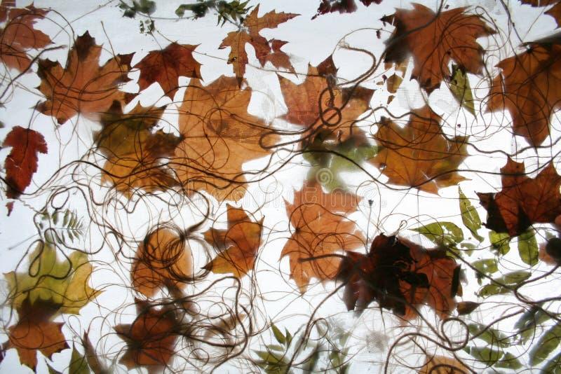 2 liści jesienią fotografia royalty free