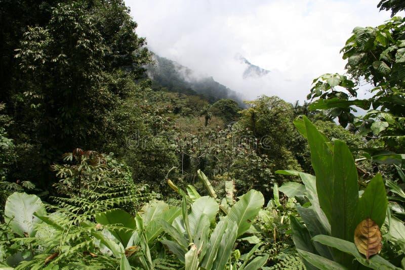 2 mest cloudforest tropiskt royaltyfria foton
