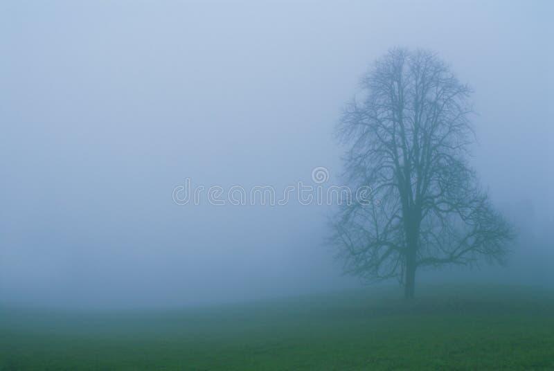 2 mgła. zdjęcia royalty free