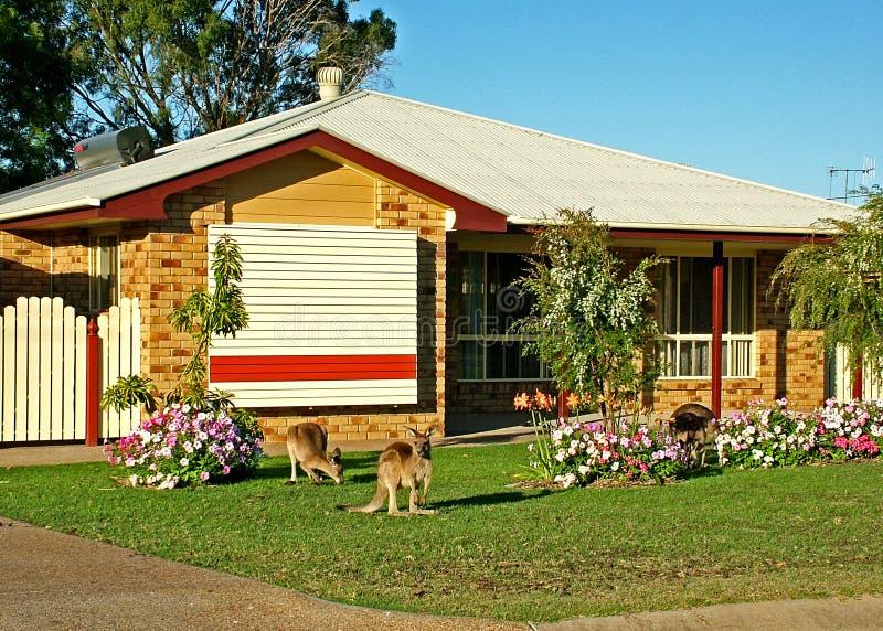 Download 2 miejskiego kangura obraz stock. Obraz złożonej z miasteczko - 32877