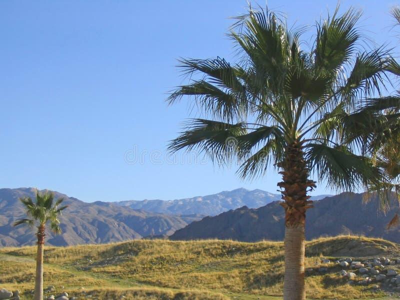 2 Palmen, die Montierung übersehen lizenzfreie stockbilder