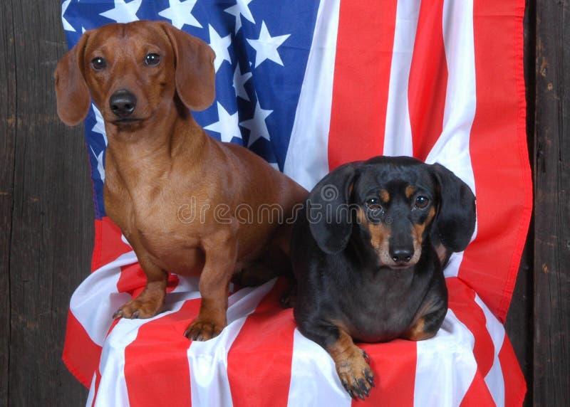 2 patriottische Tekkels royalty-vrije stock fotografie