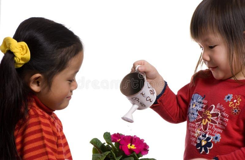 2 podlewanie roślin. fotografia stock