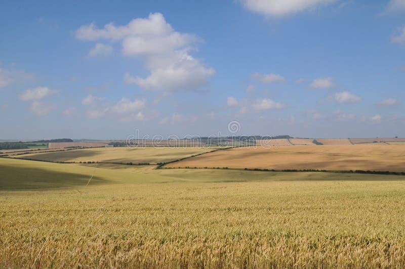 2 pole kukurydzy obraz stock