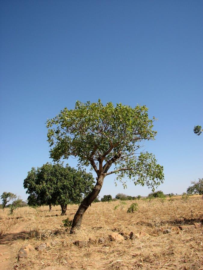 2 przeciw drzewnemu światowi obraz stock