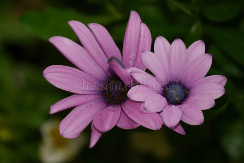 2 Purple Petaled Flower In Selective Focus Photography Free Public Domain Cc0 Image