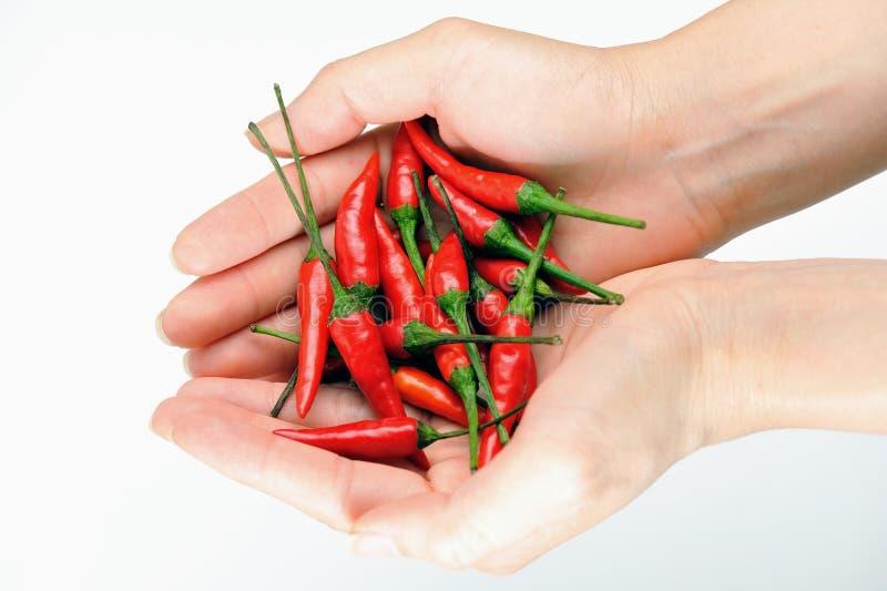 2 röda chilir arkivbild