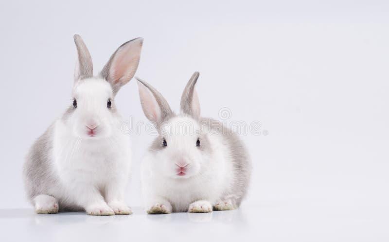 2 rabbit royalty free stock photo