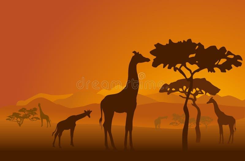 2 safari obrazy stock