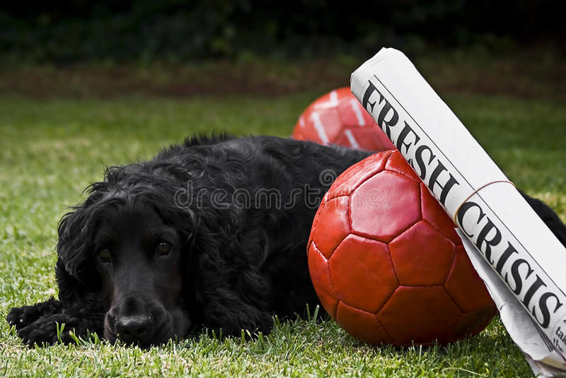 Download 2 Soccer Balls With Newspaper Headline & Watchdog Stock Photo - Image of pooch, press: 12503286