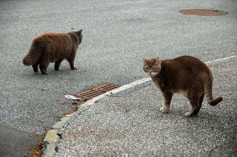 Download 2 soft fluffy brown cats stock photo. Image of contrast - 12635716