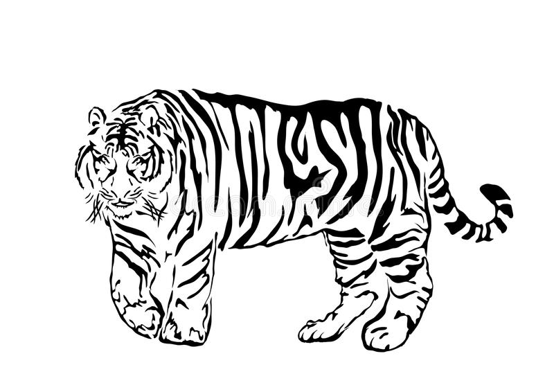 2 tigeryear ilustracja wektor