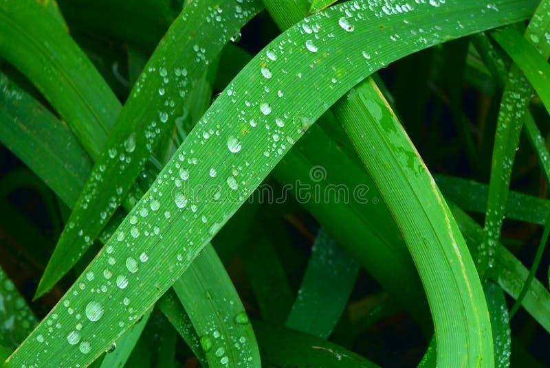 2 trawy. zdjęcia stock