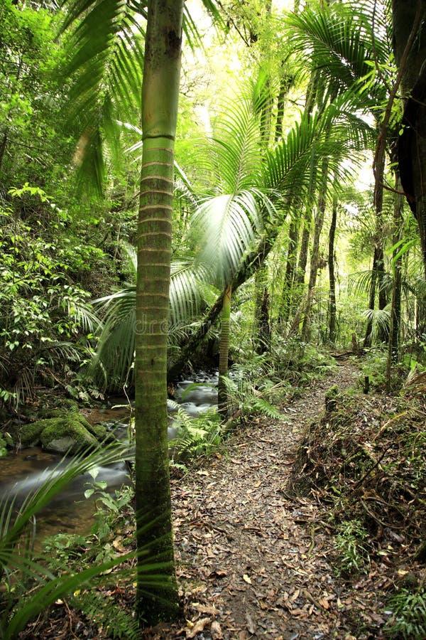 2 tropikalny las deszczowy fotografia royalty free