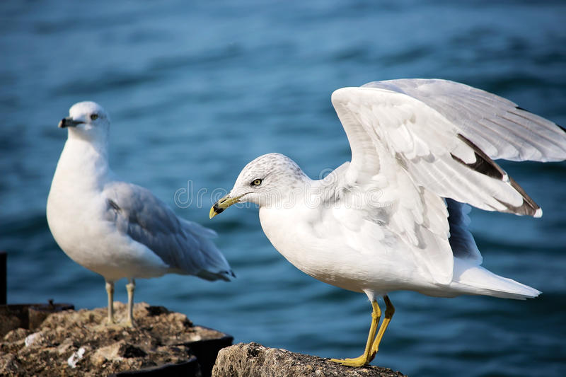 2 White Dove Standing On Brown Rock Near Body Of Water Free Public Domain Cc0 Image
