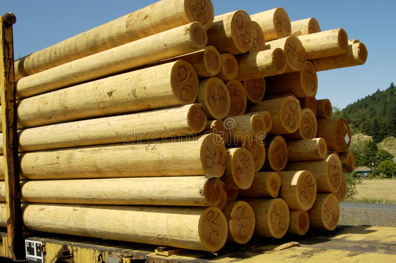 2 wood poler royaltyfri foto