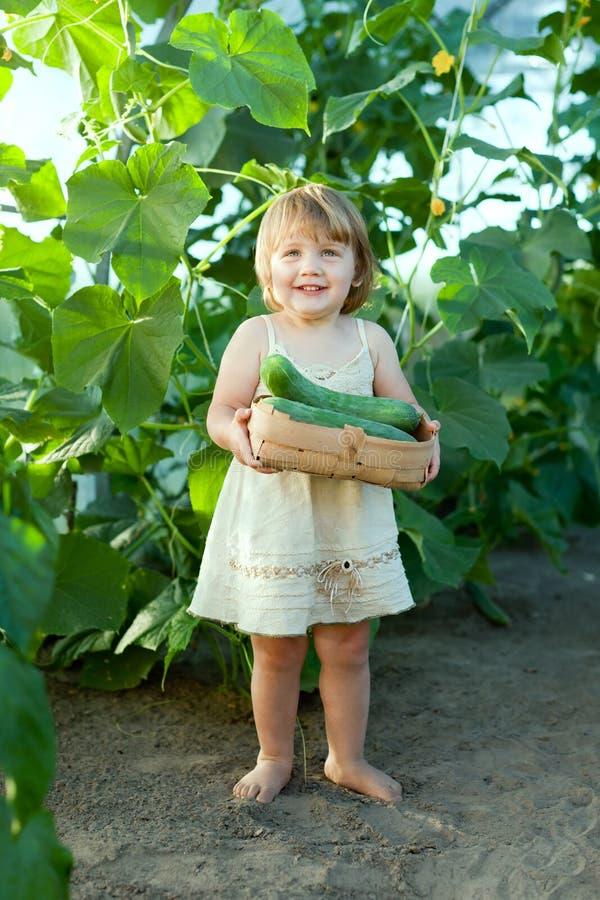 2 years child picking cucumbers royalty free stock photo