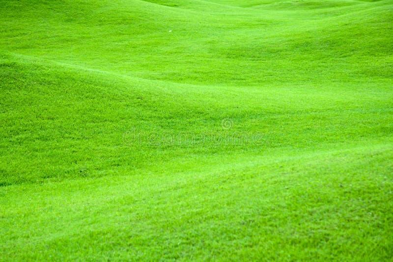 2 zielone pastwiska obraz royalty free