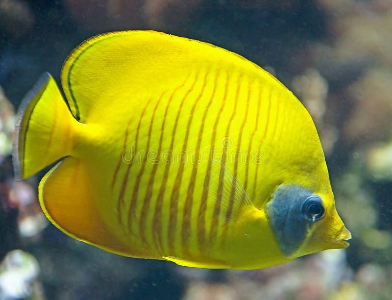20 tropikalnych ryb zdjęcia royalty free