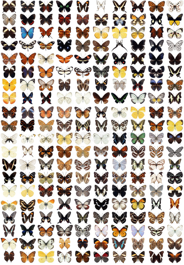 200 olika fjärilar vektor illustrationer