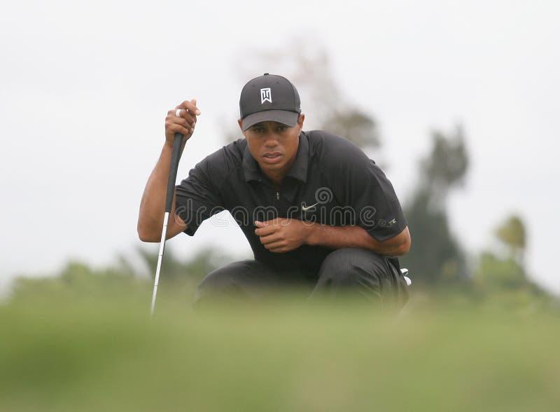 2007 doral Tiger Woods royaltyfri fotografi