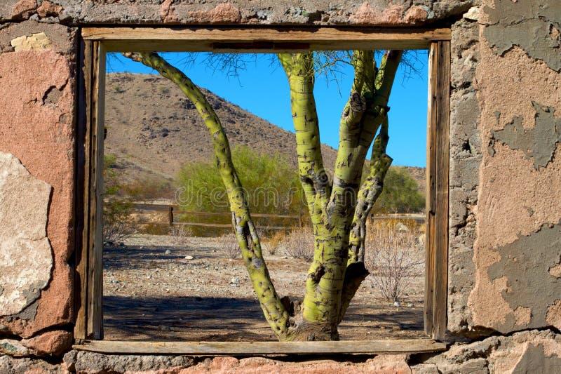2009/365/304 Pale Verde Through The Window fotografía de archivo libre de regalías