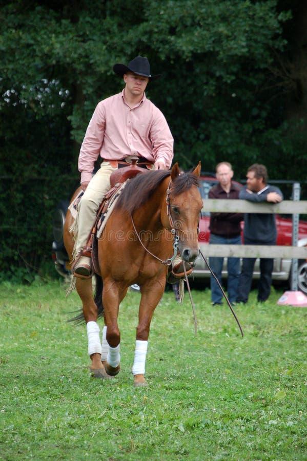 2010年比利时horsefair 免版税库存图片