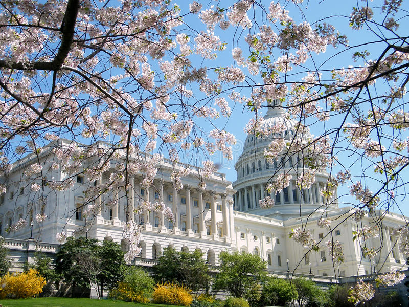 2010 άνθη που χτίζουν το κεράσ στοκ εικόνα με δικαίωμα ελεύθερης χρήσης