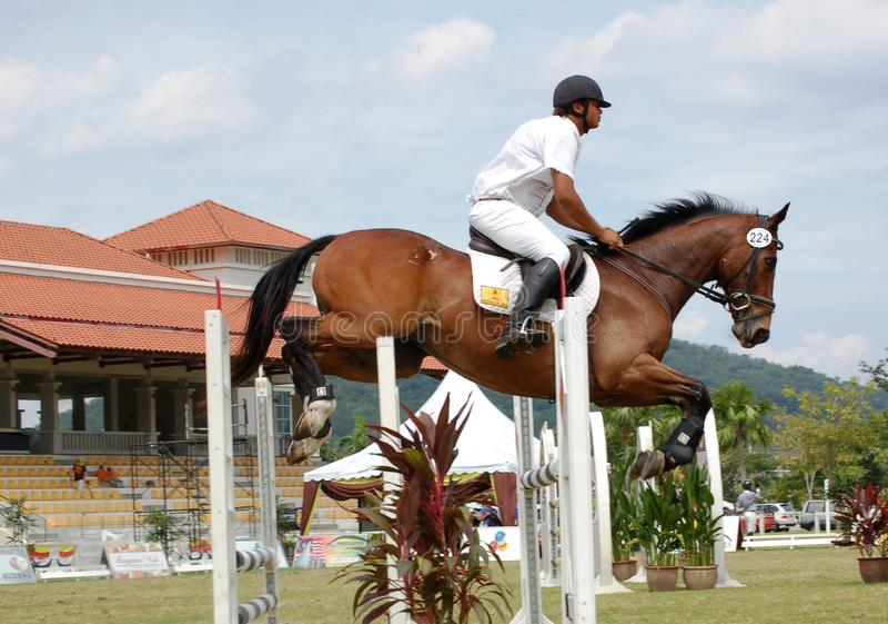 2010 końskich skokowych premiercup obrazy stock