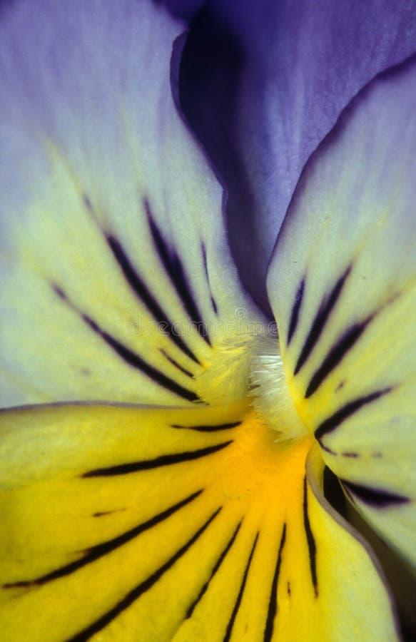五颜六色的蝴蝶花