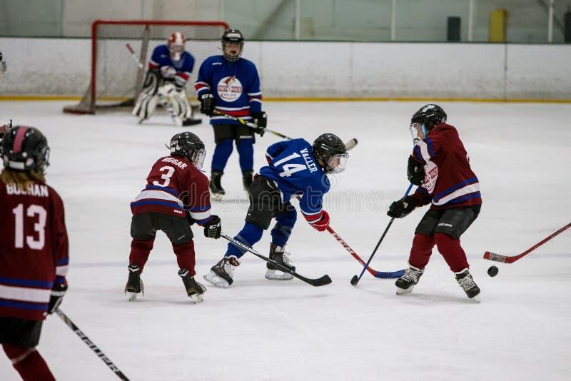 20161204.141943.sean_fall_hockey_game.9219 Free Public Domain Cc0 Image