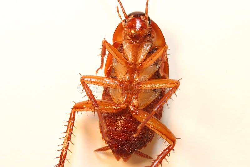 停止的蟑螂 免版税库存照片