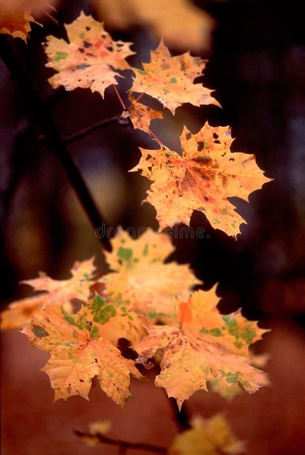 21 χρώματα φθινοπώρου στοκ εικόνες