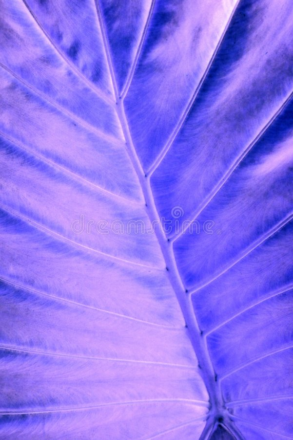 叶子光芒x 图库摄影