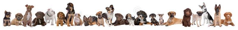 22 puppyhonden in een rij royalty-vrije stock afbeelding