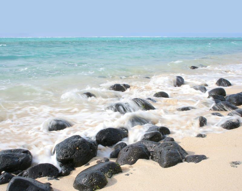 22 tropikalnej serii obrazy stock