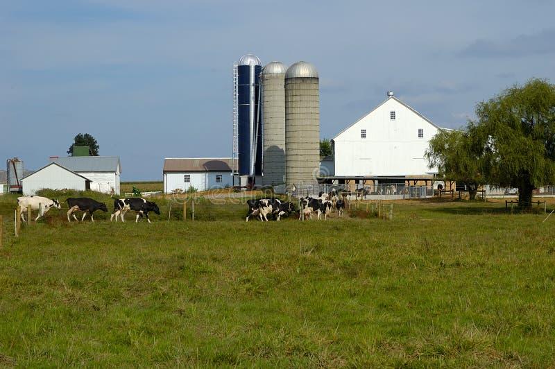 奶牛场 图库摄影