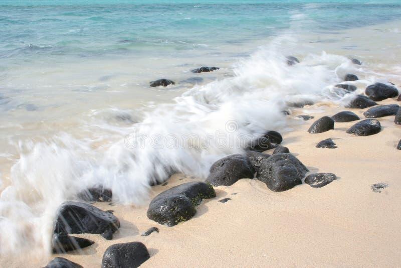 23 tropikalnych serii zdjęcia stock