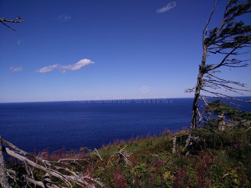 233 - Parc de l' national ; Île-Bonaventure-et-du-Rocher-Percé : Mousses de DES de Sentier images libres de droits