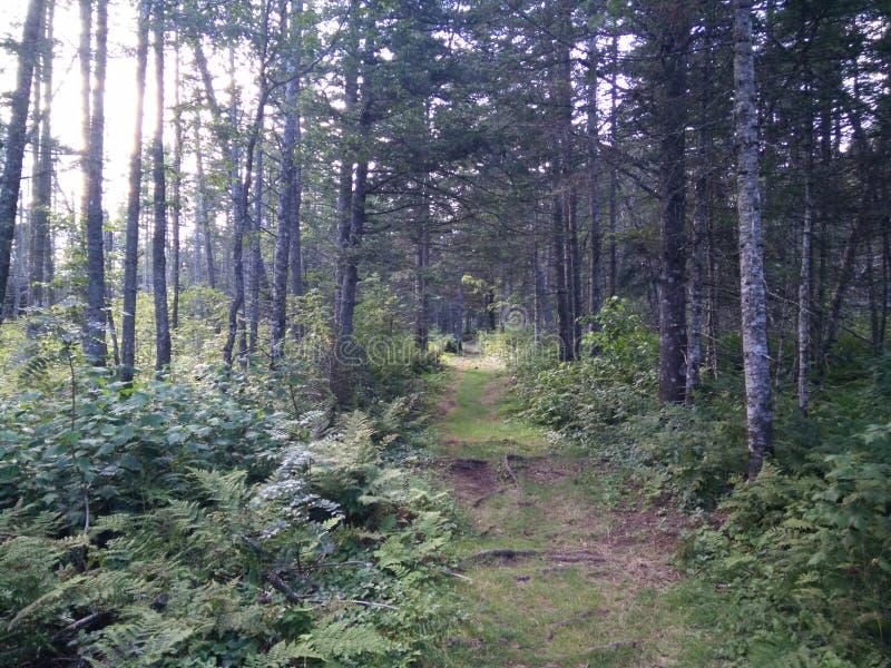 235 - Parc de l' national ; Île-Bonaventure-et-du-Rocher-Percé : Sentier Paget photo libre de droits