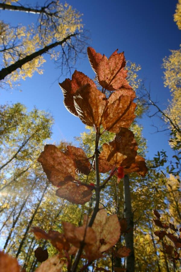 24 folhas na luz do sol. fotografia de stock royalty free