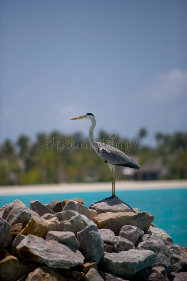 Download 25 maldives fotografering för bildbyråer. Bild av utomhus - 987599