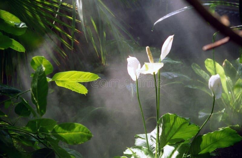 森林lillies雨 免版税库存照片
