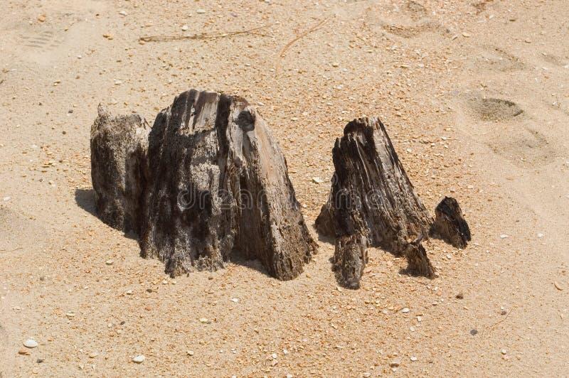 海滩树桩 免版税库存照片