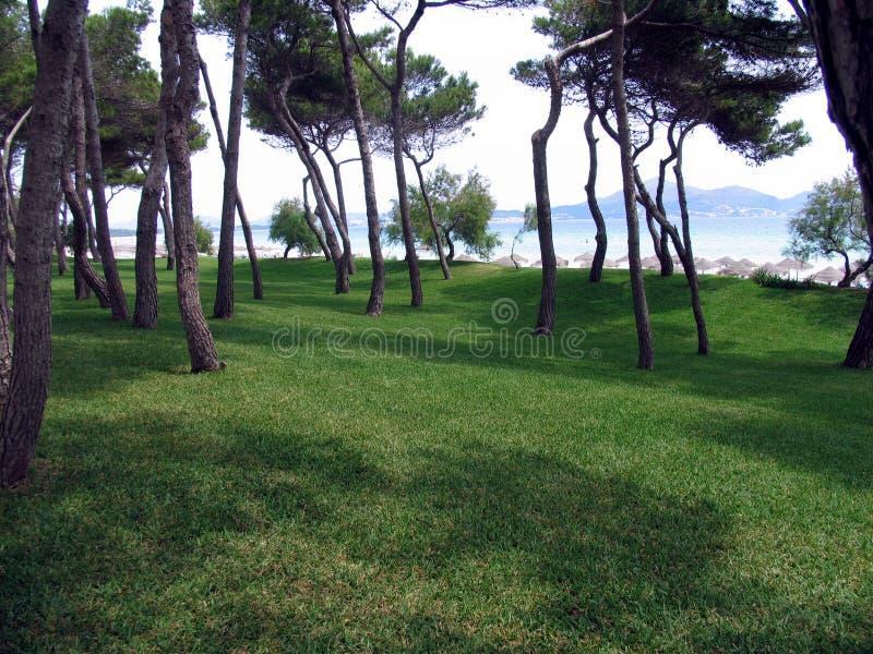 海滩森林一点 免版税库存图片