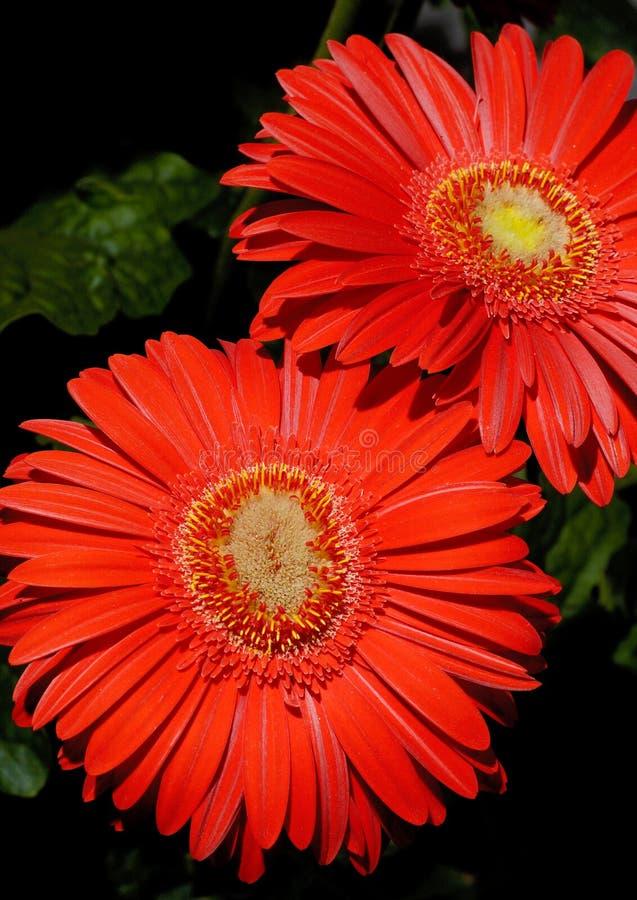 29朵花 库存照片