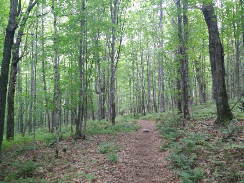 291 - Parc du Laque-Temiscouata national : Montagne-De-Chert de Sentier photographie stock