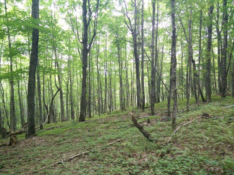 293 - Parc du Laque-Temiscouata national : Montagne-De-Chert de Sentier image libre de droits