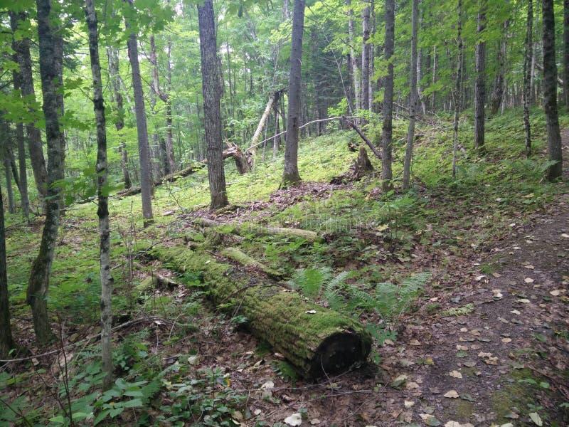 296 - Parc du Laque-Temiscouata national : Montagne-De-Chert de Sentier image libre de droits